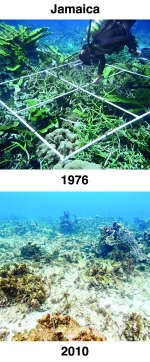 Then and now comparison of a section of coral reef in Jamaican waters.